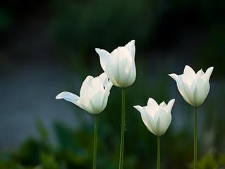 Tre bilder - vårljus