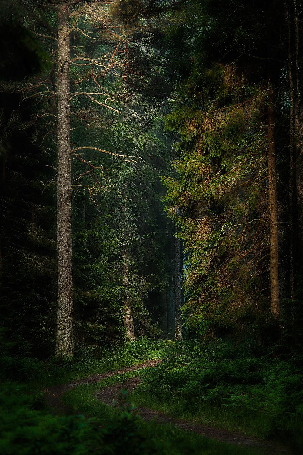 belyst-skogsväg-tidig-morgon.jpg