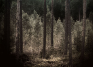Skogen i tre bilder