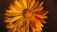 En sol i varje blomma