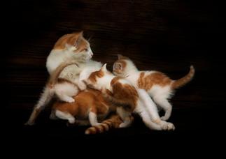 kattungar i klump.jpg