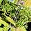 Thumbnail: Arc en ciel multiple cristal et améthystes