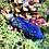 Thumbnail: Pendule flacon lapis lazuli