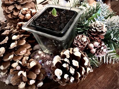 Centre de table jacinthe, quartz rose MM