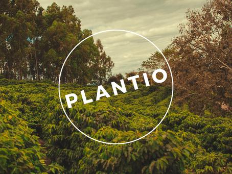 Plantio do Café