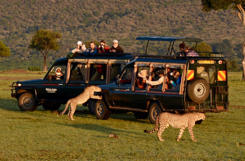 Landcruiser surrounded by lions in Maasai Mara. Marcia Moore