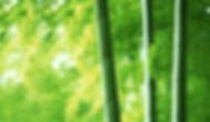 bamboo - Bear Fiber, Horizon Hemp