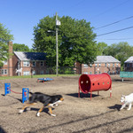 communityriver_rodgersforge_2019_dog1_ek