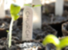 church_planting-400x300.jpg