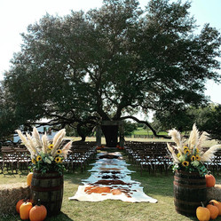 pumpkin tree.jpg