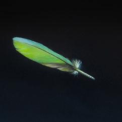 Feather I Debora Makkus 2016 - 30x24cm a
