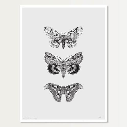 Papillons de Nuit Art Print 18x24