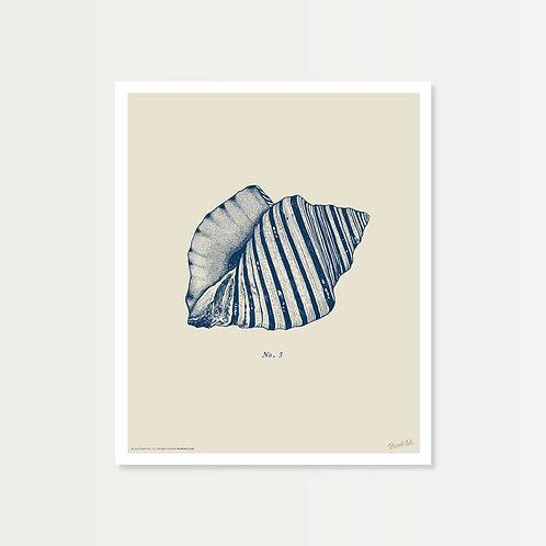 Seashell No. 3 Art Print 14x17