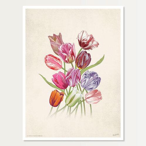Eleven Tulips Art Print 18x24