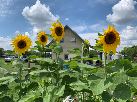 Come Blog with us at Tinyhouse Farms!