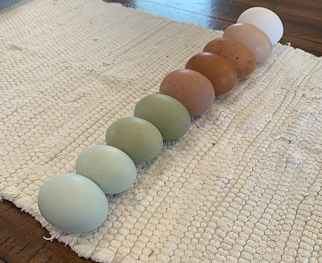 Rare Assorted Hatching Eggs