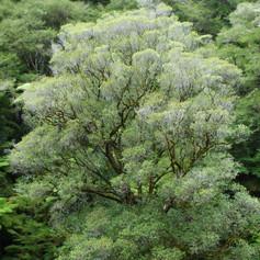 Tree by John Sears