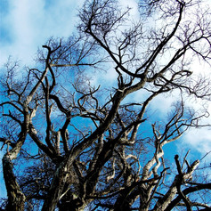 Tree and Blue Sky by John Sears