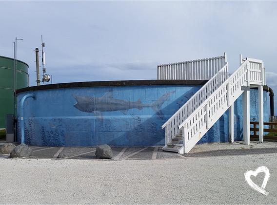 Other NZ Street Art by Amanda Sears28.jp