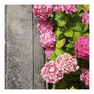 A Sears Instagram Photos_1st Lot20197 (M