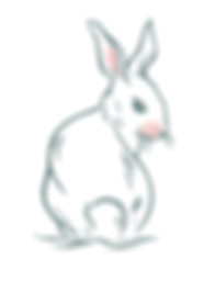 POLLY RABBITS- Rabbit-01.png