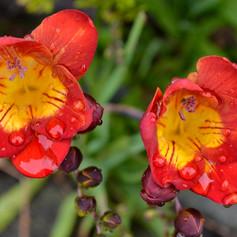 Flowers by John Sears
