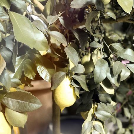 Lemon Lover ...