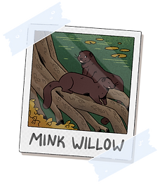 Mink_Willow_Photo.png