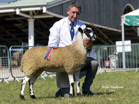 Pyes on a high with Mule championship coup as Great Yorks Show makes welcome return