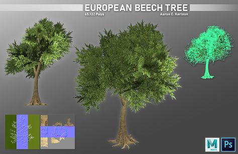 karlsona_project_e_part_2_European_Beech