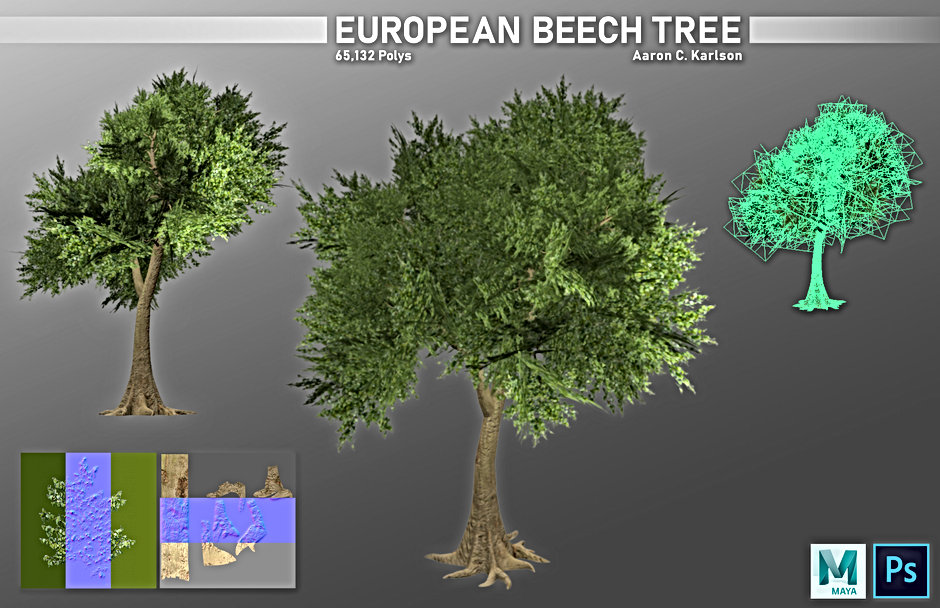 karlsona_project_e_part_2_European_Beech