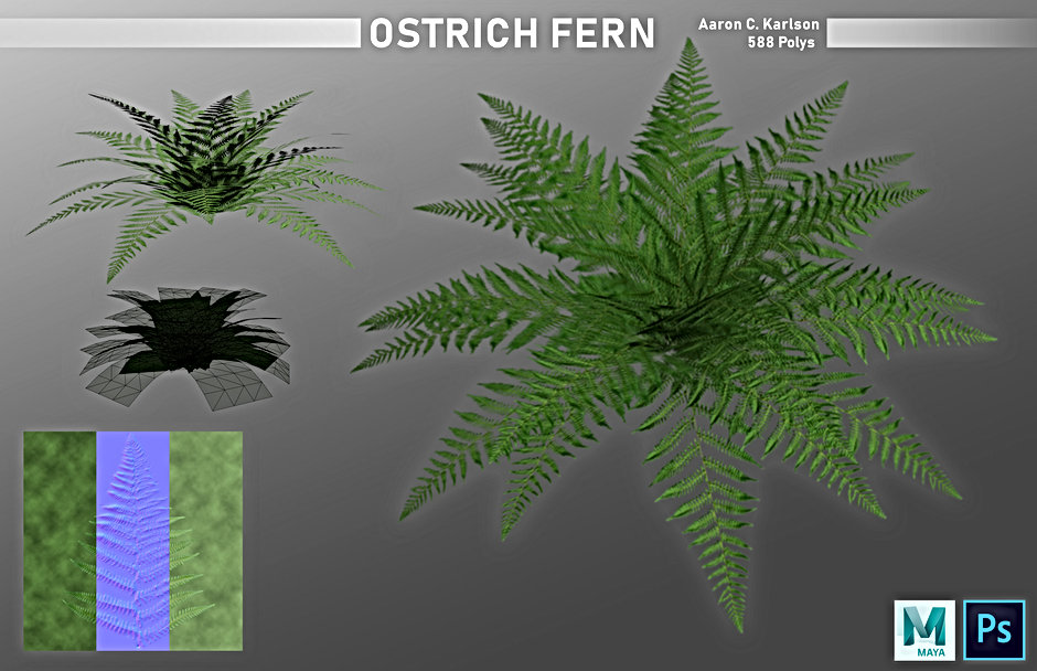 karlsona_project_e_part_2_Ostrich_Fern.j