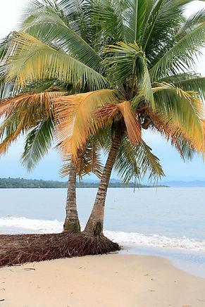 Tierra-de-Sueños-Manzanillo-Palm.jpg