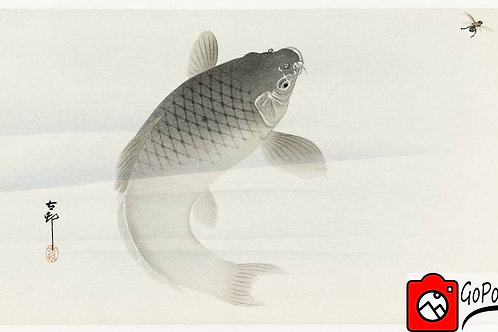 Japanische Zeichnung eines Karpfen Gerahmt