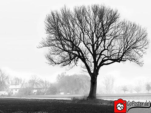 Baum im Nebel in Schwarzweiß (Poster)