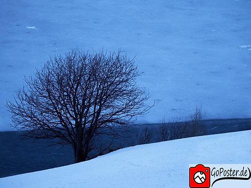 Reschenpass / Baum über zugefrohrener Heidersee (Poster)