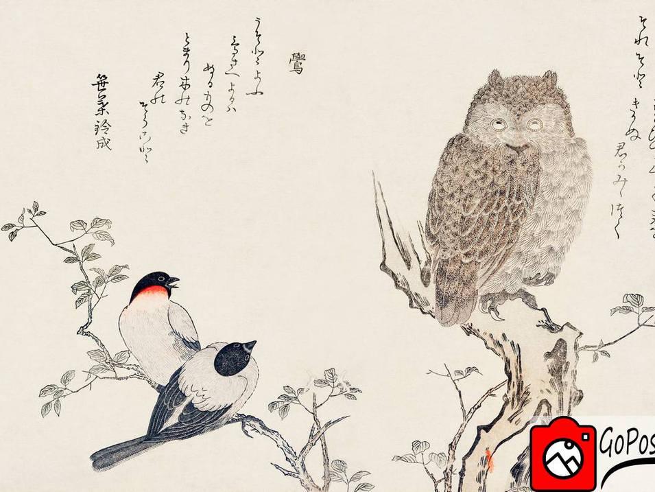 Japanische Zeichnung einer Eule