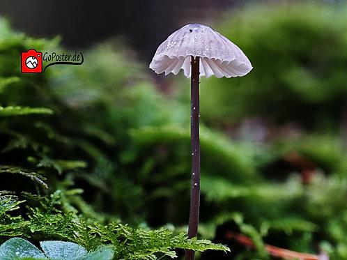 Makroaufnahme eines Pilzes