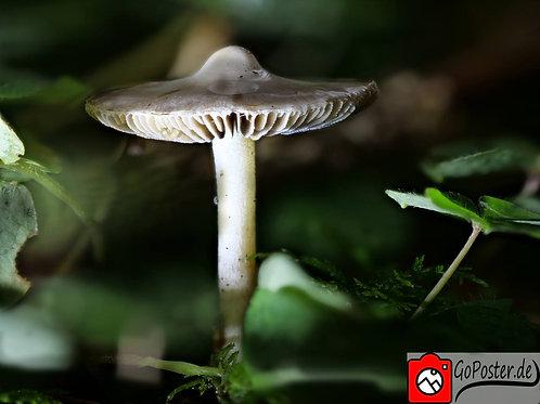 Wunderschöner Pilz (Poster)