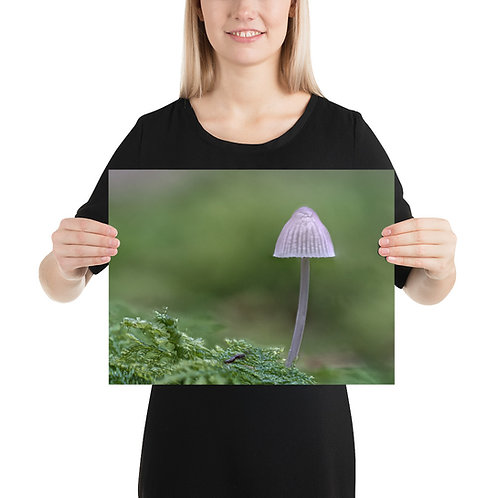 Makroaufnahme eines winzigen Pilz (Poster)