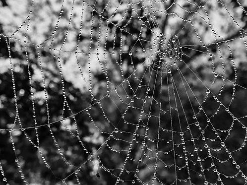 Spinnennetz (Poster)