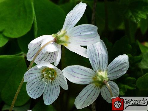 Makroaufnahme von Blüten (Poster)