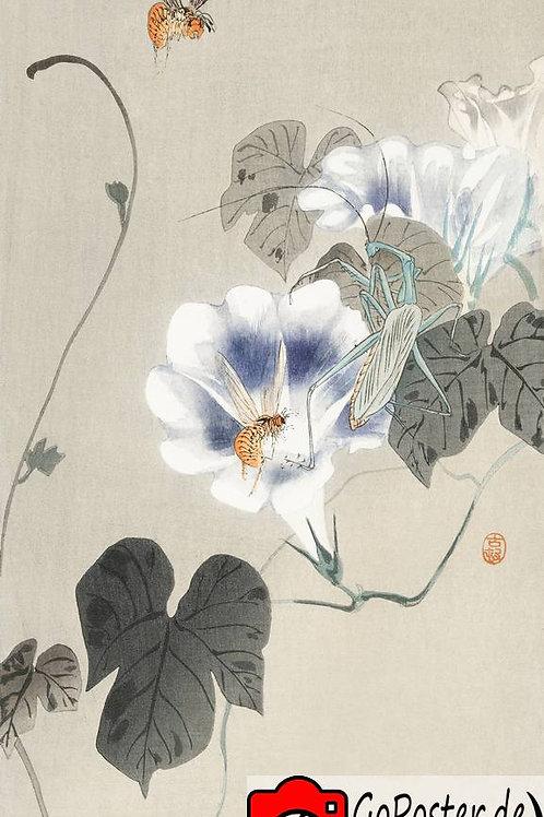 Gerahmter Druck einer wunderschönen japanischen Zeichnung