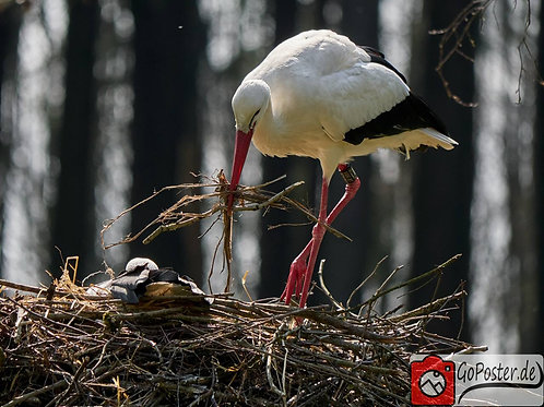 Storch mit Baby (Poster)