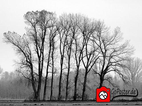 Baumgruppe Schwarzweiß