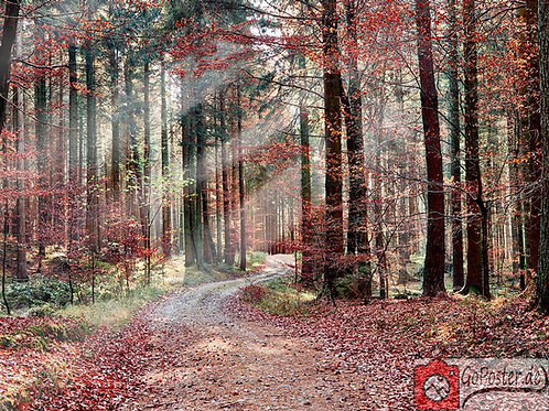 Roter Herbst (Poster)