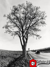 Baum am Straßenrand (Poster)