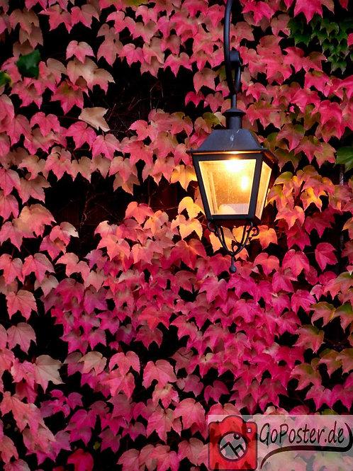 Laterne mit herbstlich roten Blättern (Poster)