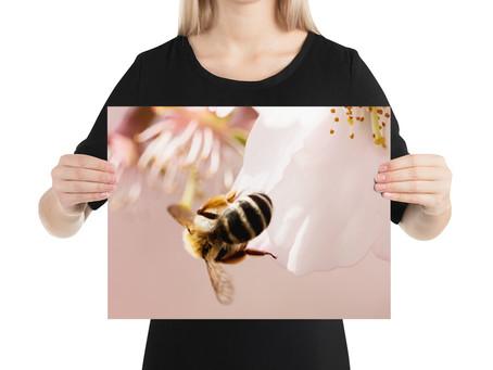Frühlingsangebot - Neue XXL Gutscheine für Poster