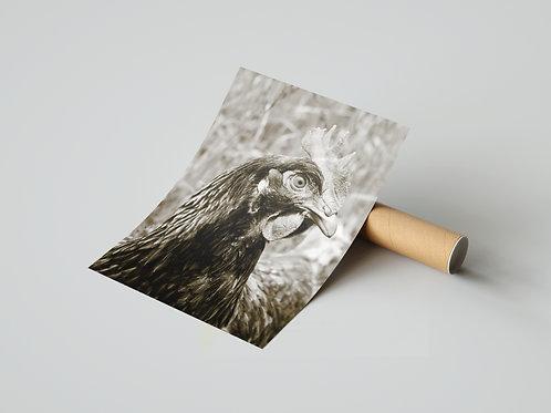 Schwarzweißaufnahme Huhn (Poster)
